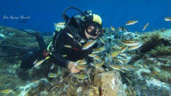 NADD/CMAS Open & Advanced Diver