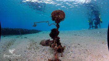 NADD/CMAS Rescue & Deep Diver